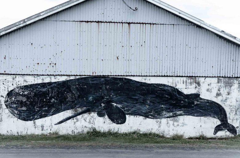 Sperm whale mural